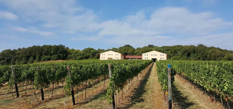 Bastia - Valpolicella - Cantina - Cellar