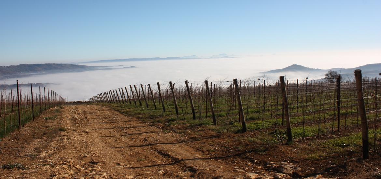 Valpolicella Col de la Bastia vineyard